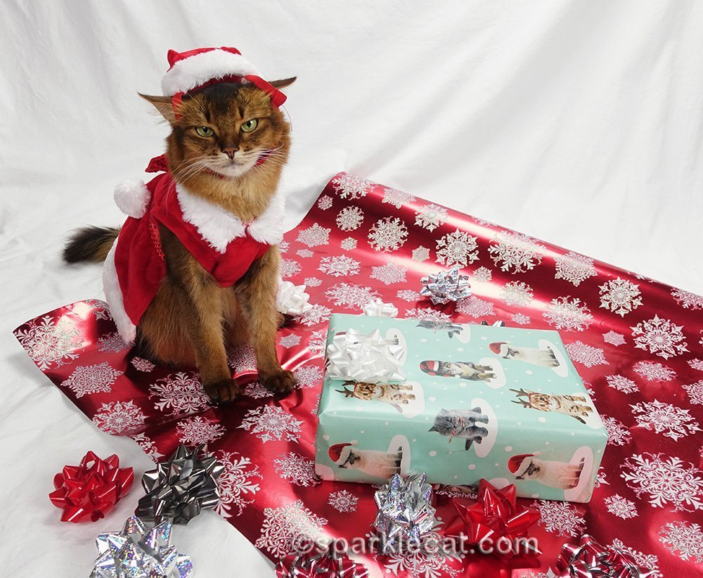 somali cat wearing an even worse santa cat hat