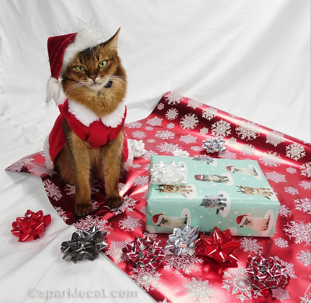 somali cat wearing cute santa cat hat