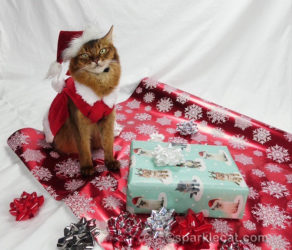 somali cat in a Christmas holiday setting