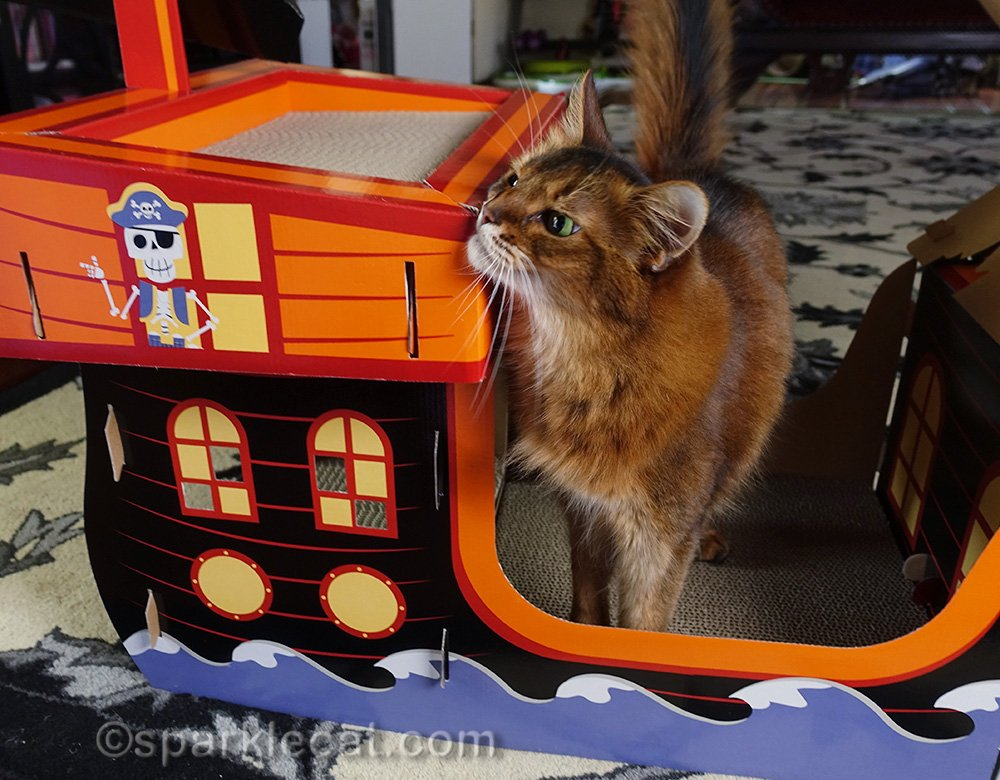 Somali cat rubbing on pirate ship scratcher
