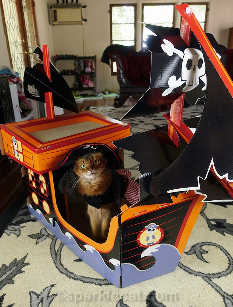 somali cat in pirate costume on pirate ship scratcher