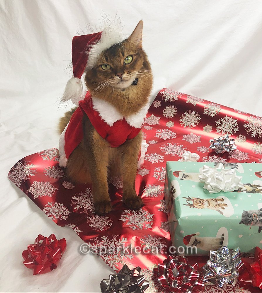 somali cat posing in santa cat outfit