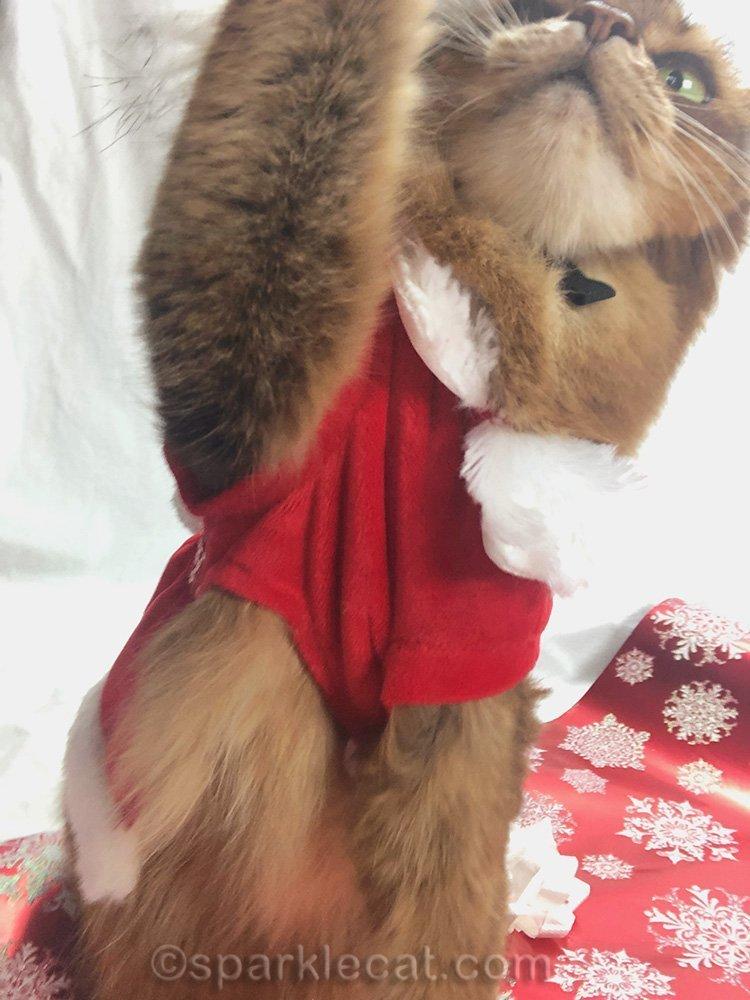 somali cat in santa cat hat reaching for iPhone