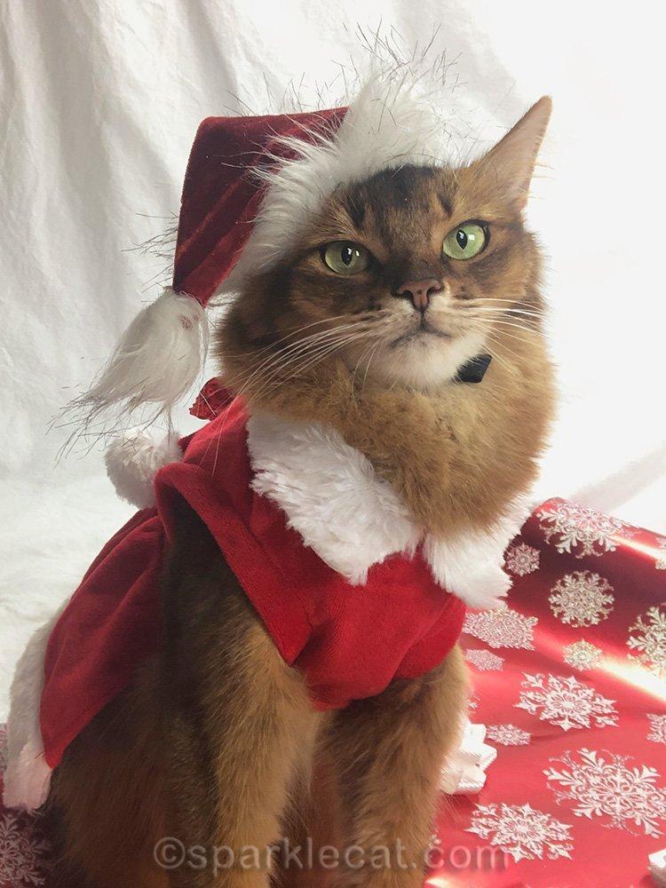 somali cat in Santa cat outfit posing for selfie