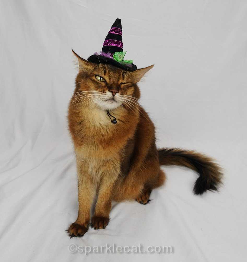 somali cat in witch hat with one eye closed