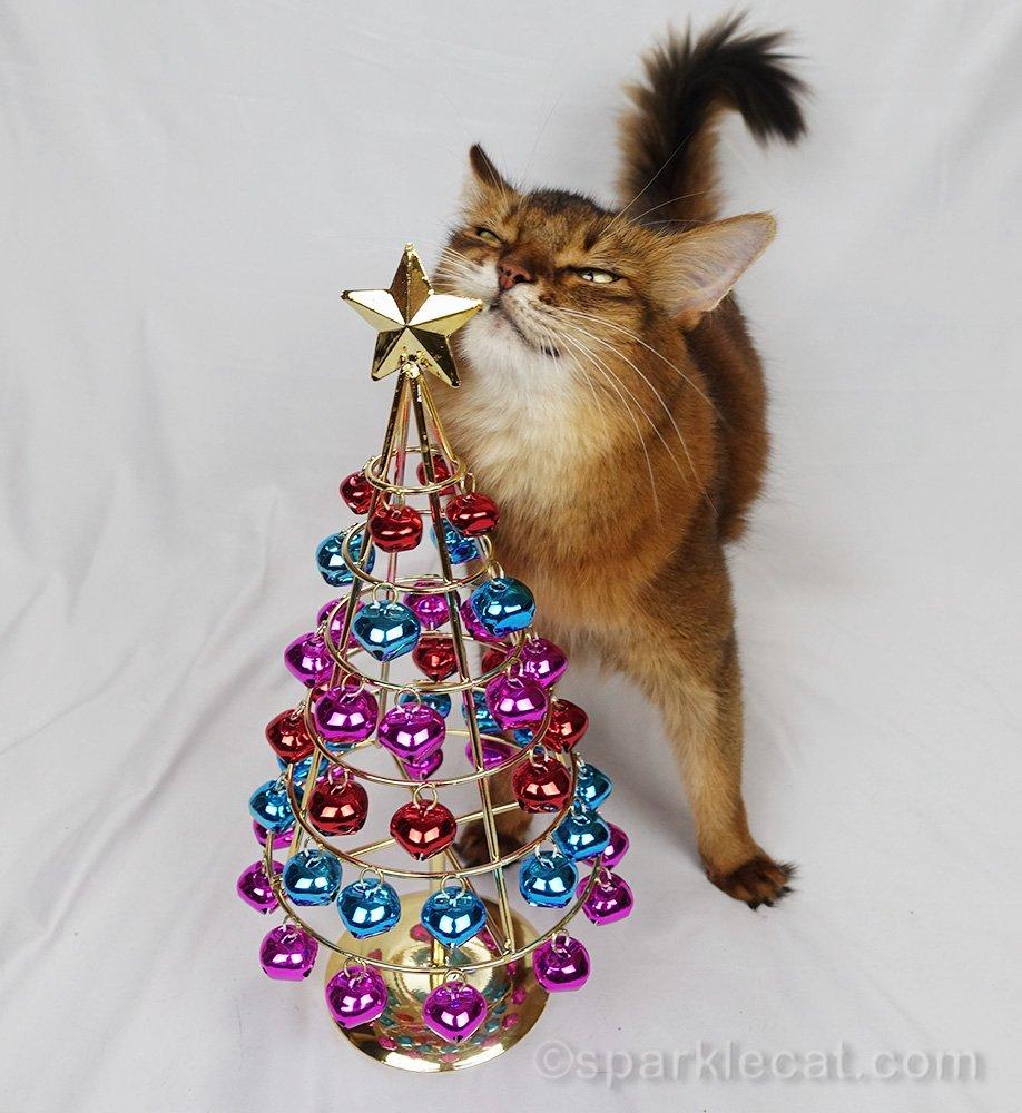 somali cat rubbing on jingle bell Christmas tree