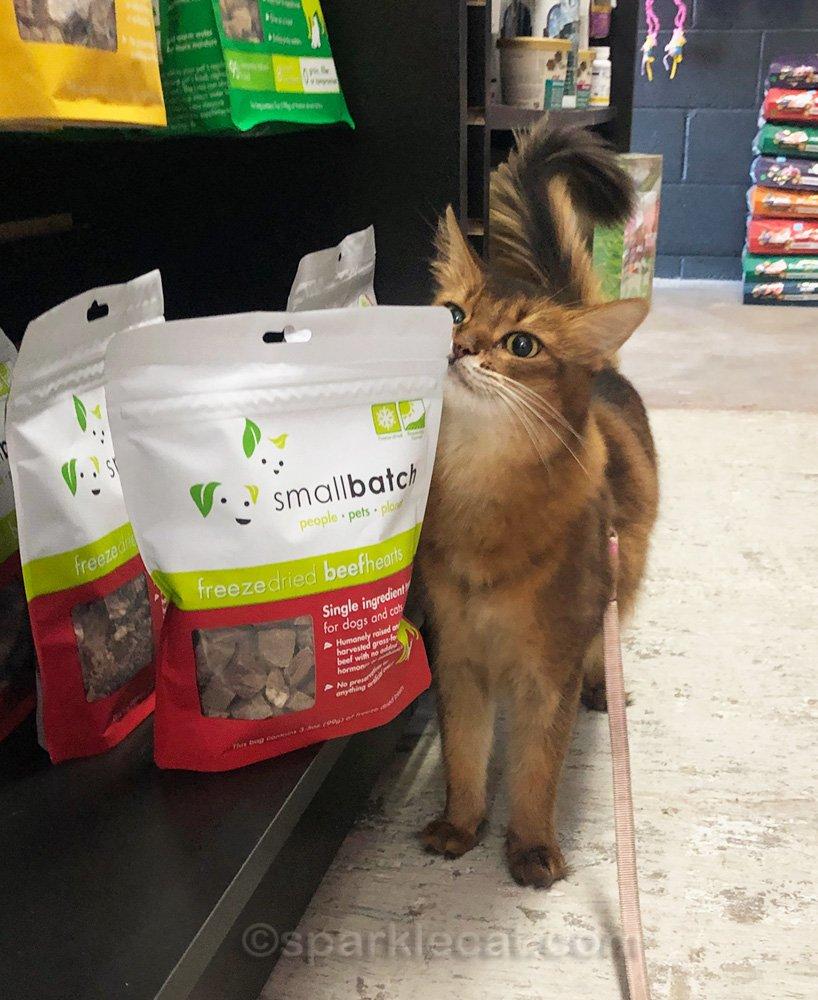 somali cat rubbing on dog food bag