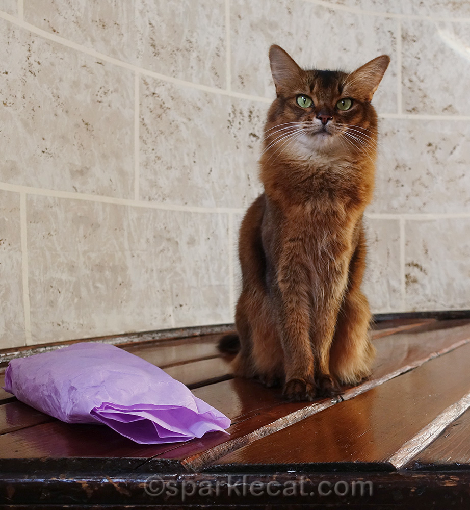 somali cat with gifts wrapped in lavender tissue paper