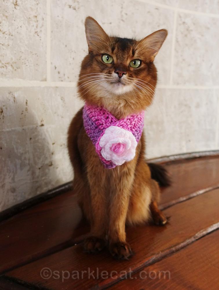 somali cat wearing hand-crocheted scarf