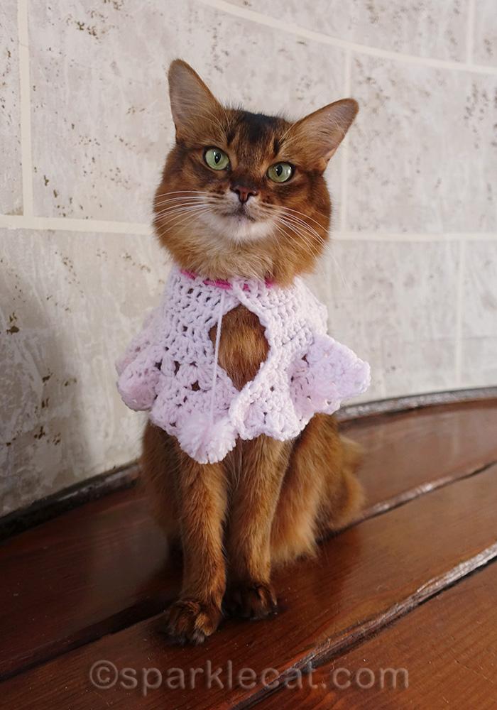 somali cat wearing pink cowl