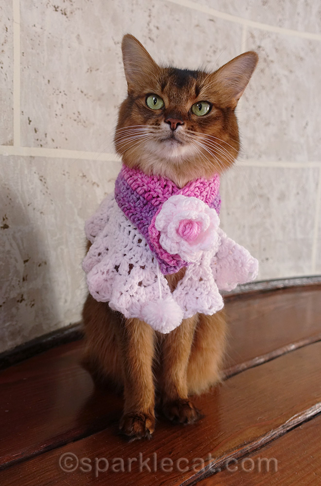 somali cat wearing cowl and scarf together