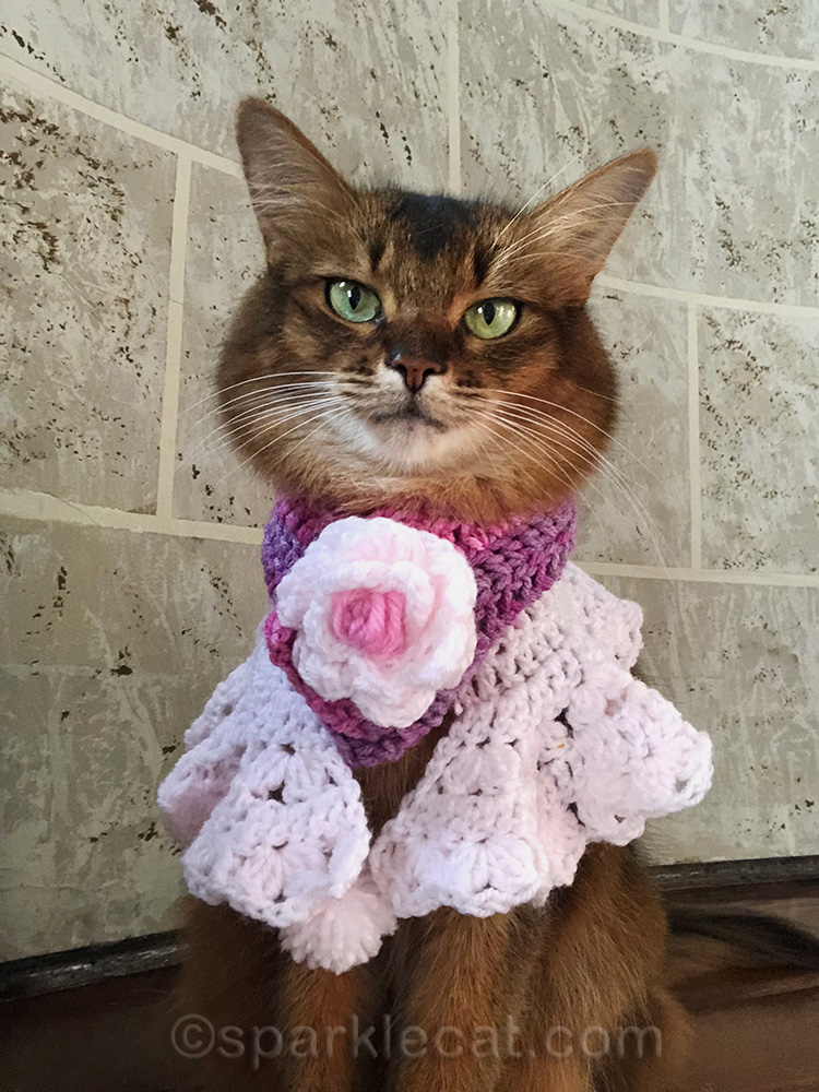 somali cat selfie with kitty accessories