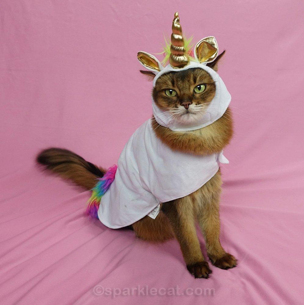 Somali cat wearing the unicorn costume