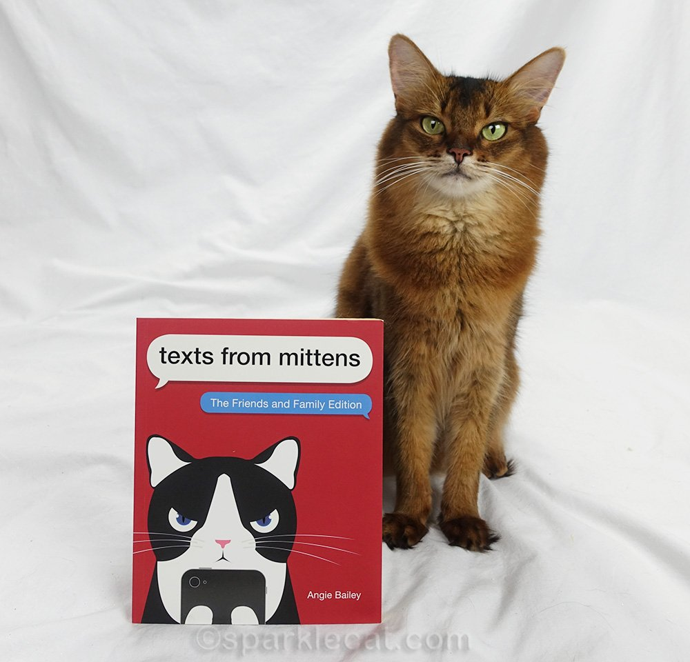 Somali cat posing with new Texts From Mittens book