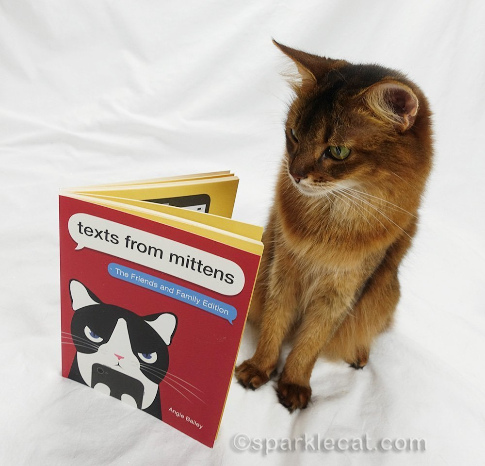 somali cat reading new Texts From Mittens book