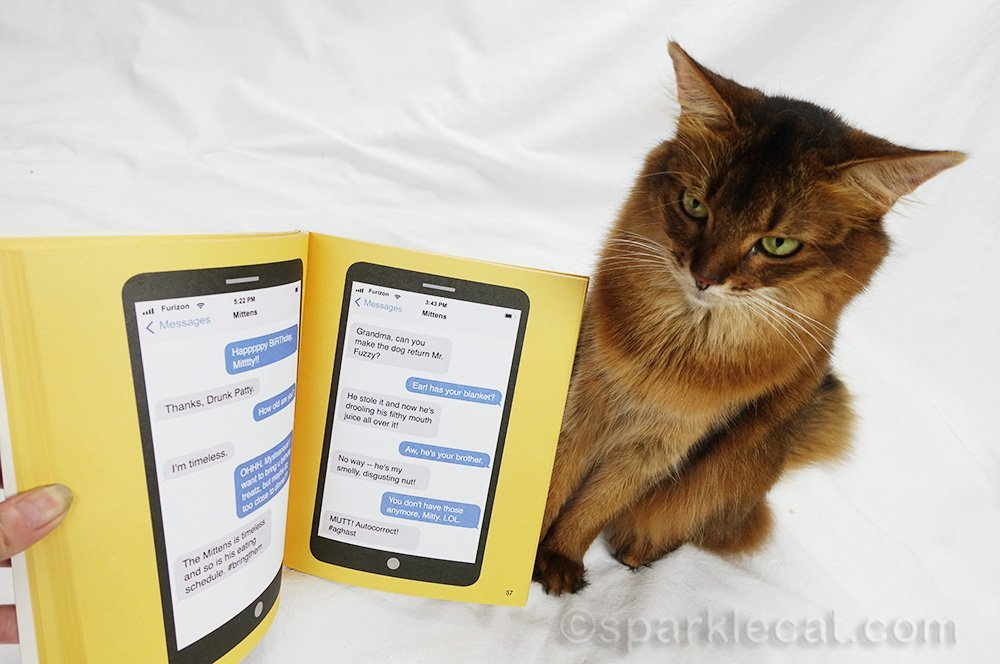 somali cat looking at page in Mittens book