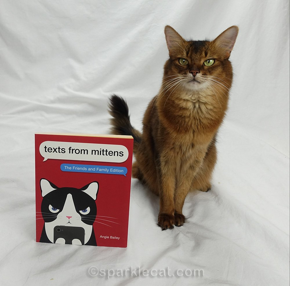somali cat with copy of new texts from mittens book to give away