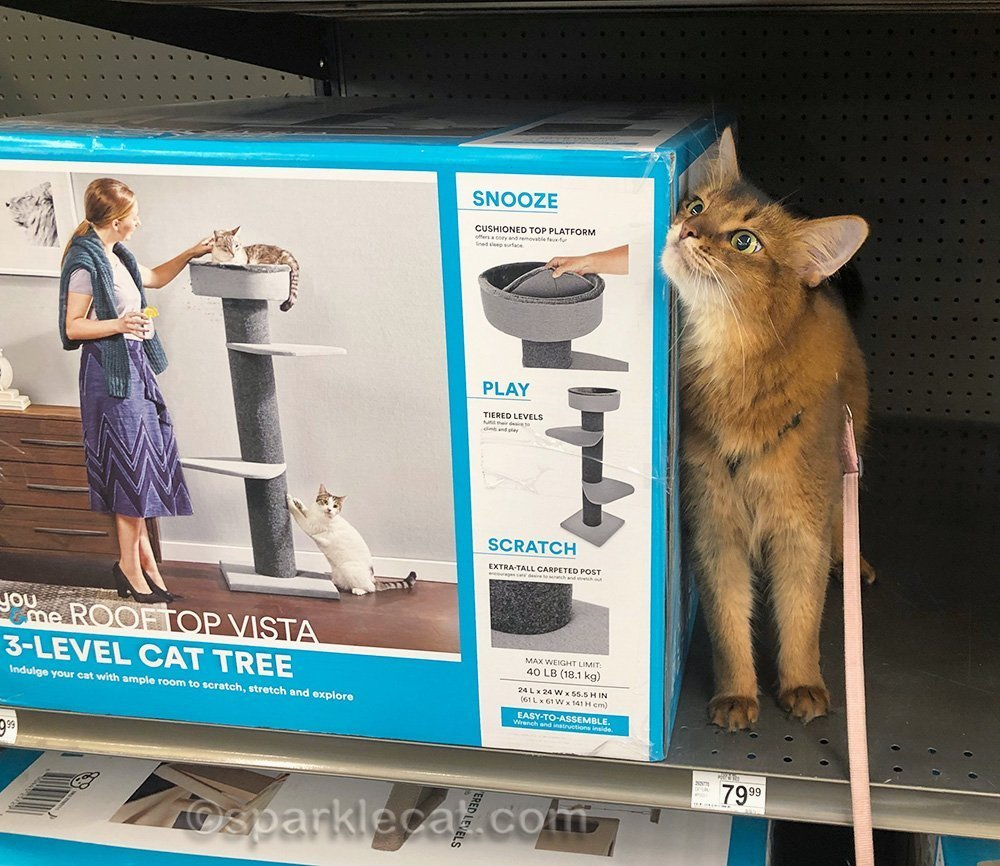 somali cat rubbing against cat tree box