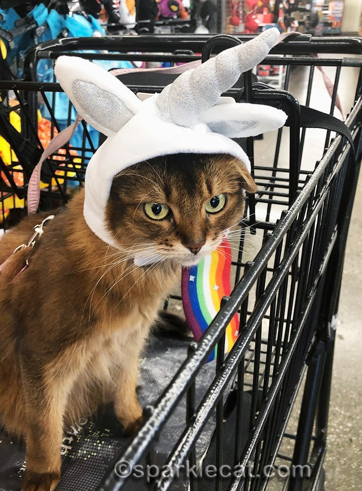 somali cat wearing a unicorn hat