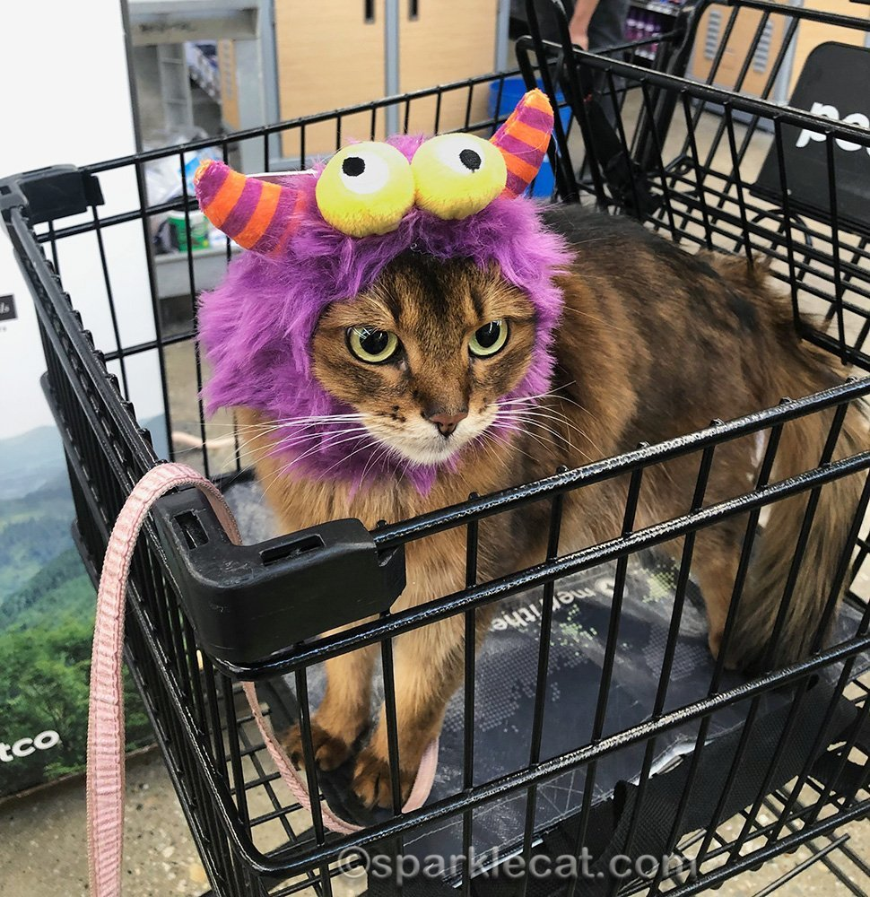 somali cat wearing a monster halloween hat