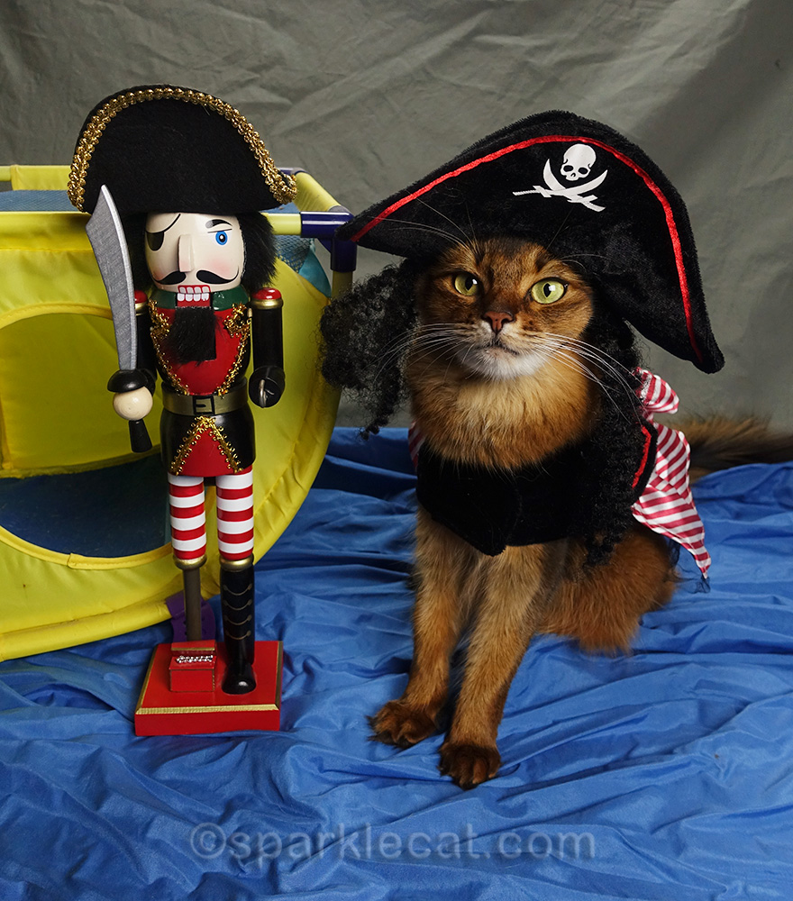 somali cat in pirate outfit and her First Mate