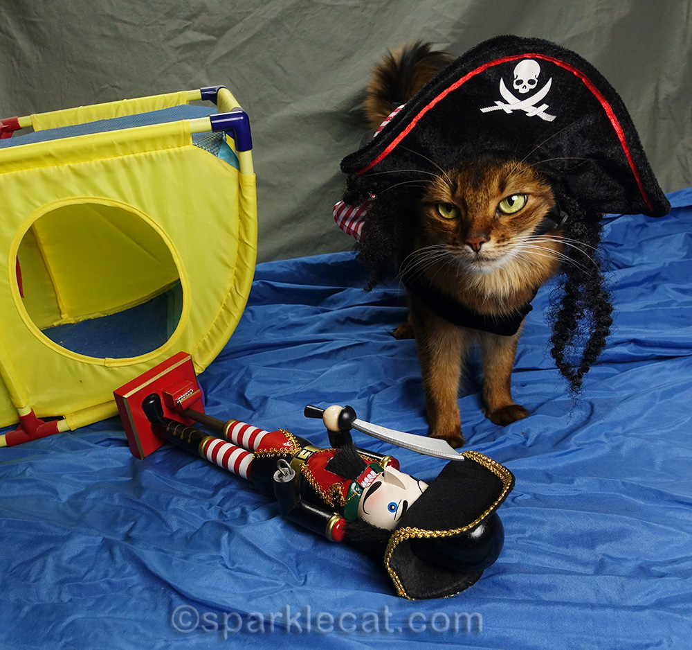 somali cat's First Mate is down
