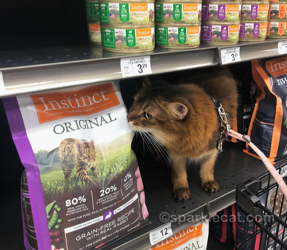 somali cat checking out a bag of cat food in pet store