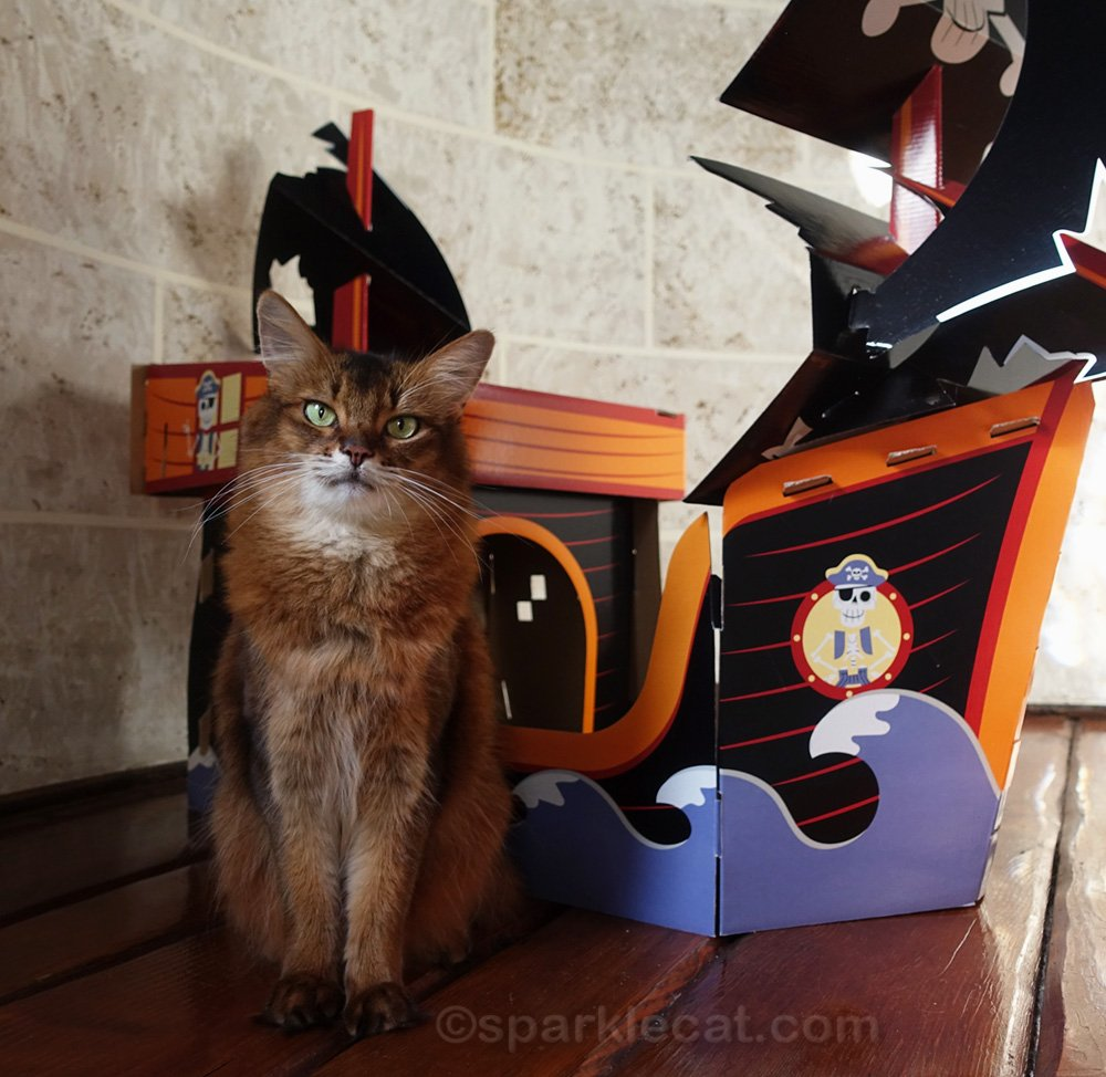 Summer celebrates cat pirate day with a short video, and several costume changes.