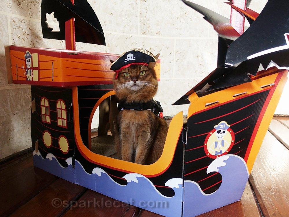 Somali cat wearing a pirate costume