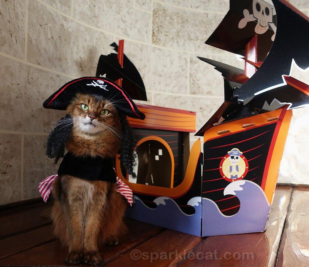 Somali cat in Jack Sparrow pirate costume