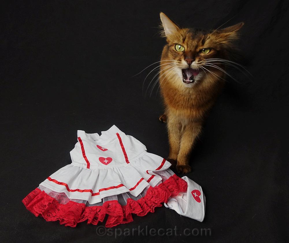 somali cat making weird face on nurse costume set