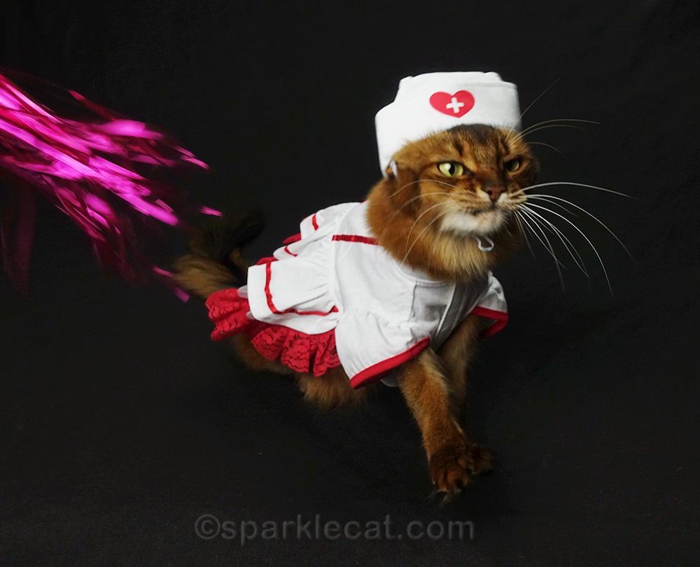 somali cat in nurse uniform making weird face