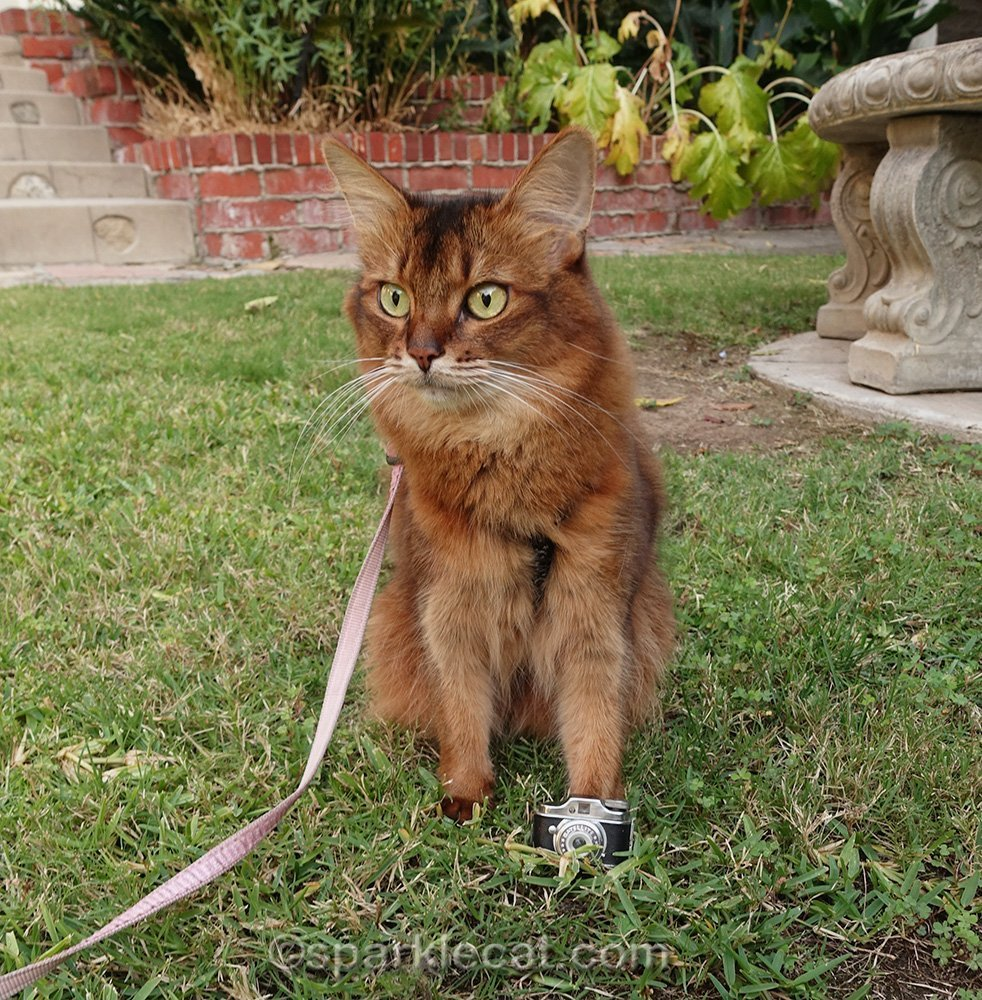 somali cat photographer looking for something to shoot