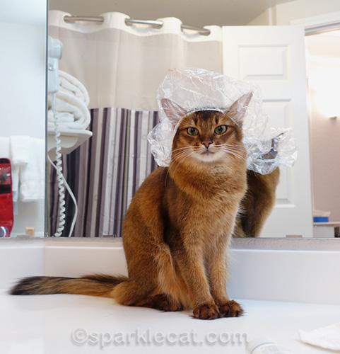 somali cat wearing shower cap