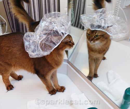 somali cat wearing shower cap looking in mirror