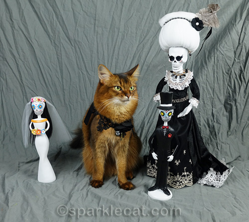 somali cat with nagging mother-in-law and day of the dead bride and groom