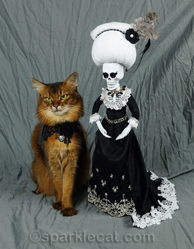 somali cat trying to ignore the day of the dead mother in law