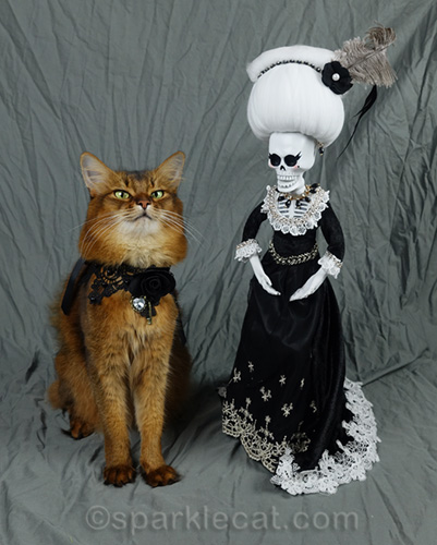 somali cat sitting up straight for day of the dead mother in law