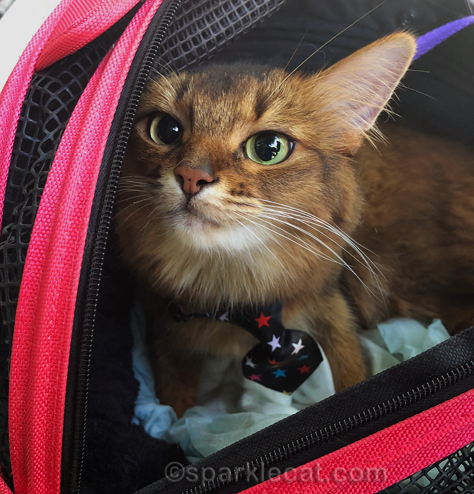 back to school for the therapy cat