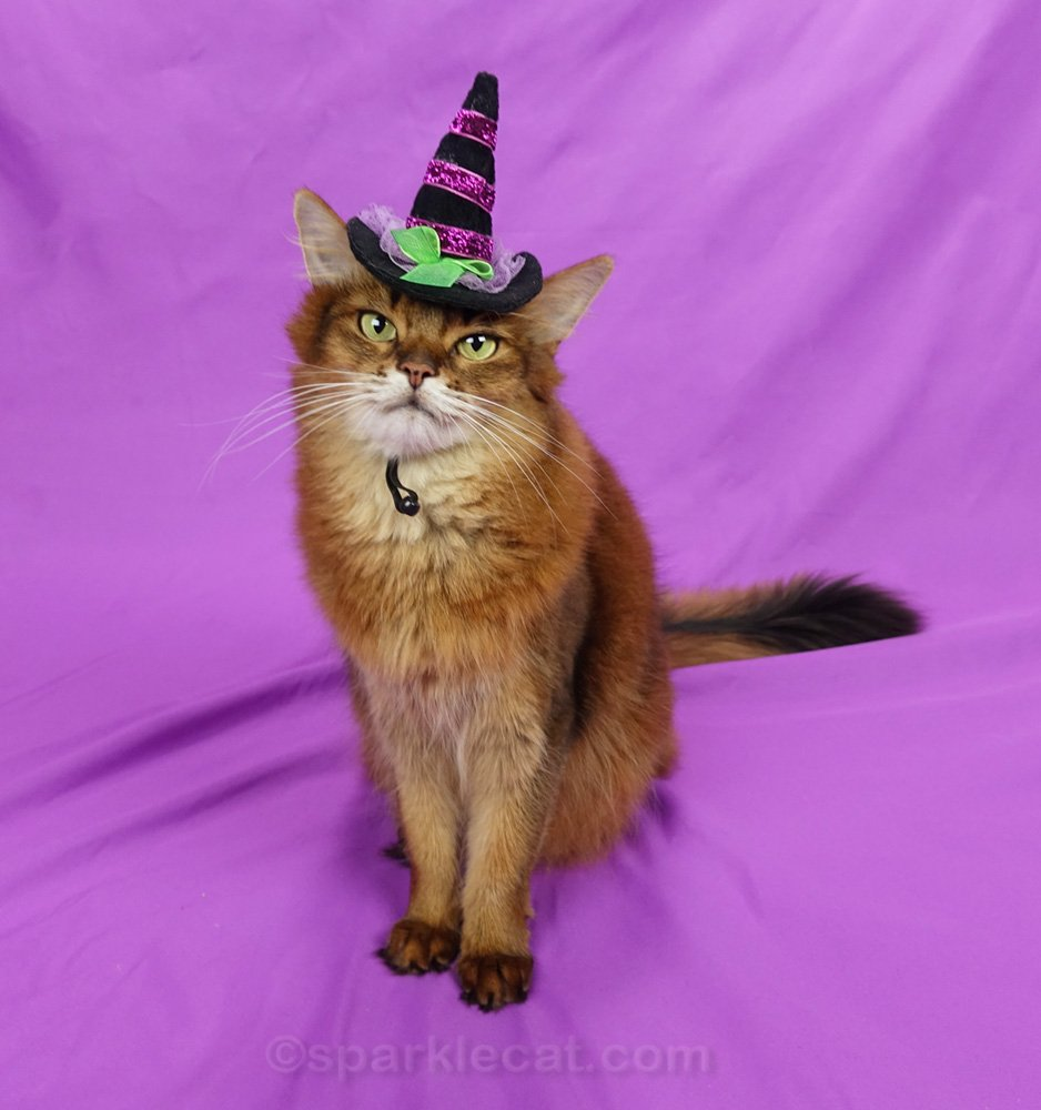 Summer shares her Halloween cat decor picks from Etsy - and throws in a couple of Halloween themed cat toys too.