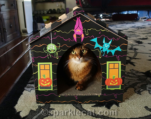 somali cat sitting in haunted house scratcher
