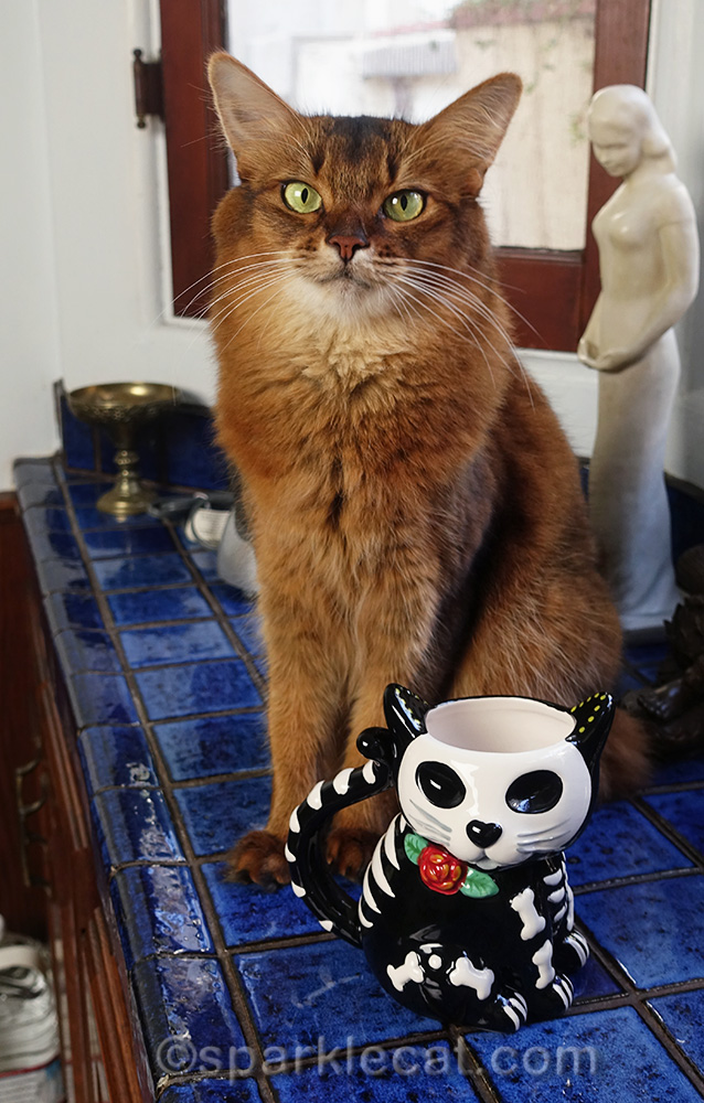 somali cat with a cute gift - a Day of the Dead cat mug