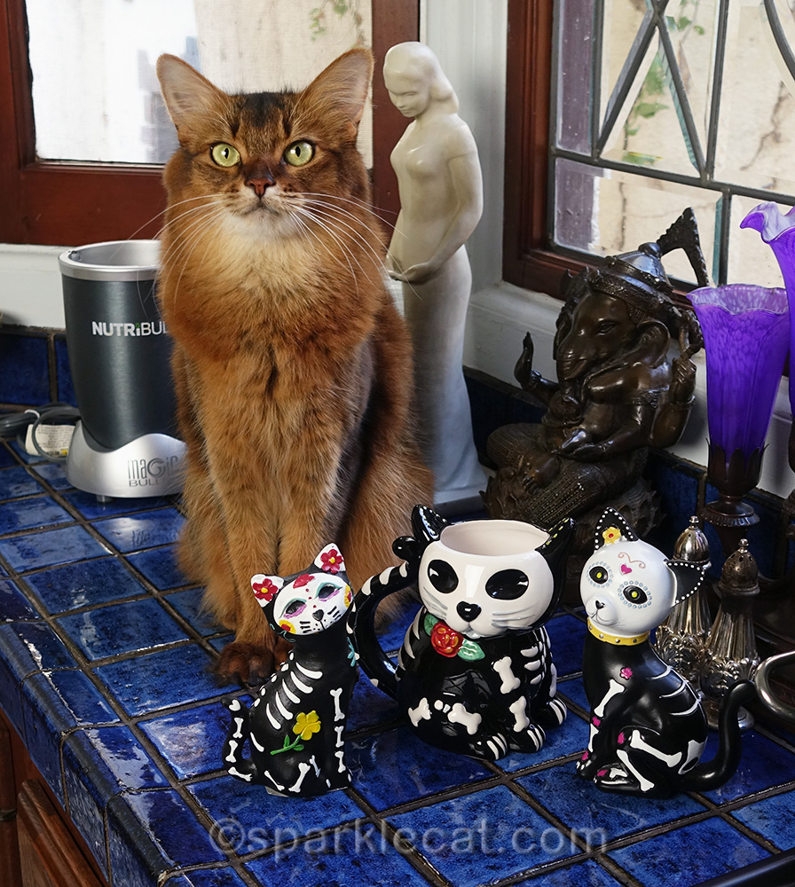 somali cat with day of the dead cat mug and figurines