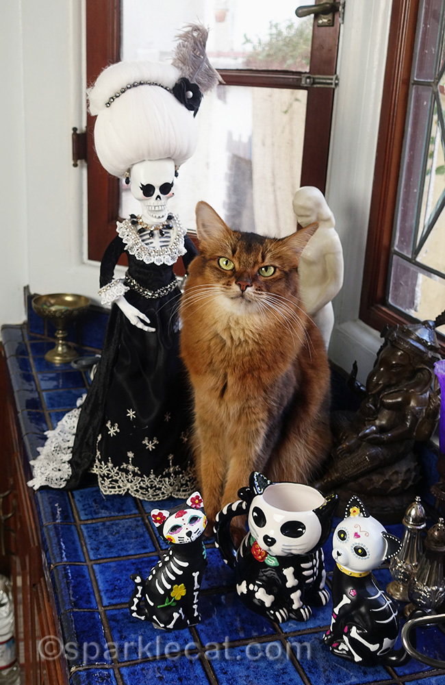 somali cat surrounded by day of the dead stuff