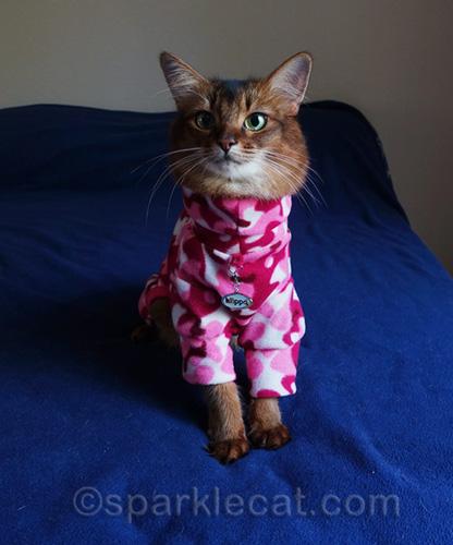 somali cat wearing pink camouflage pajamas.
