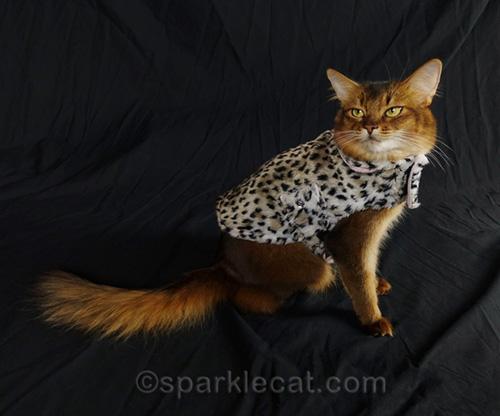 somali cat posing in leopard print jacket