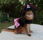 Pirate Cat Selfies