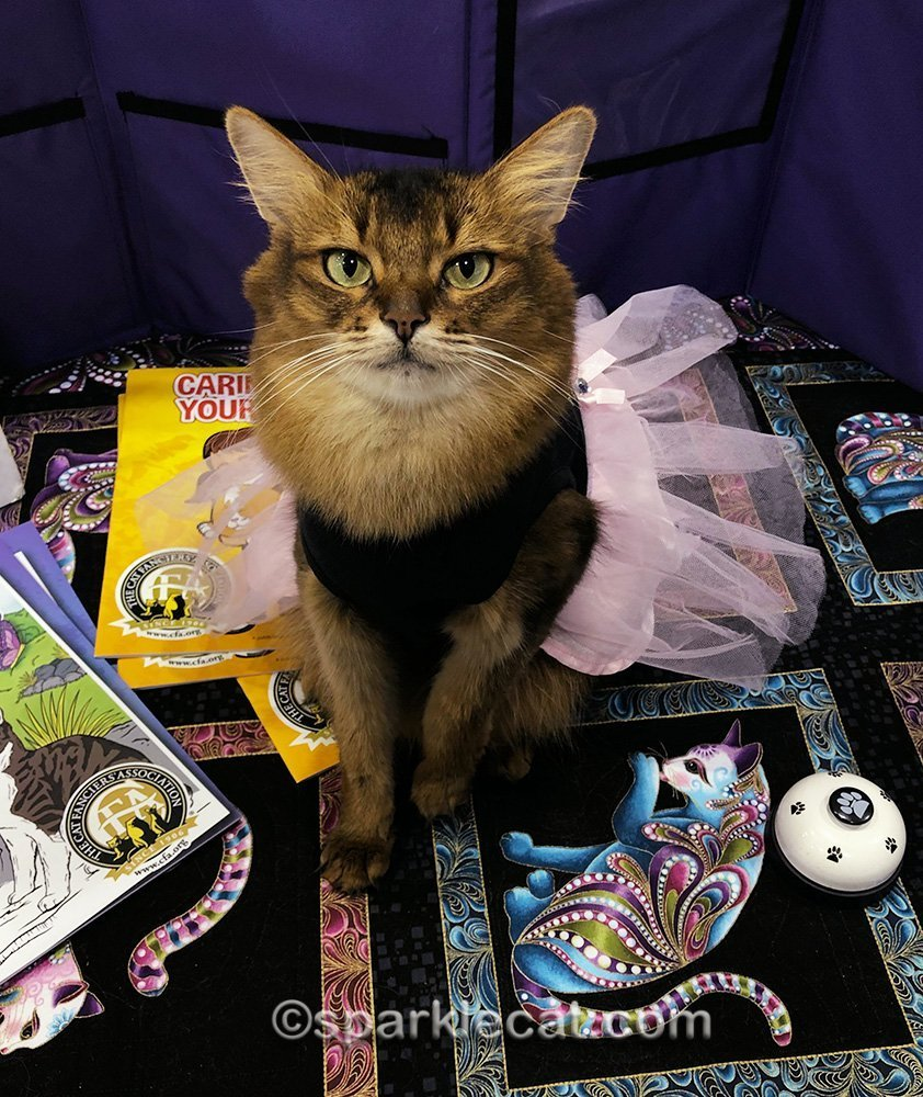 Pet Me cat at cat show wearing dress