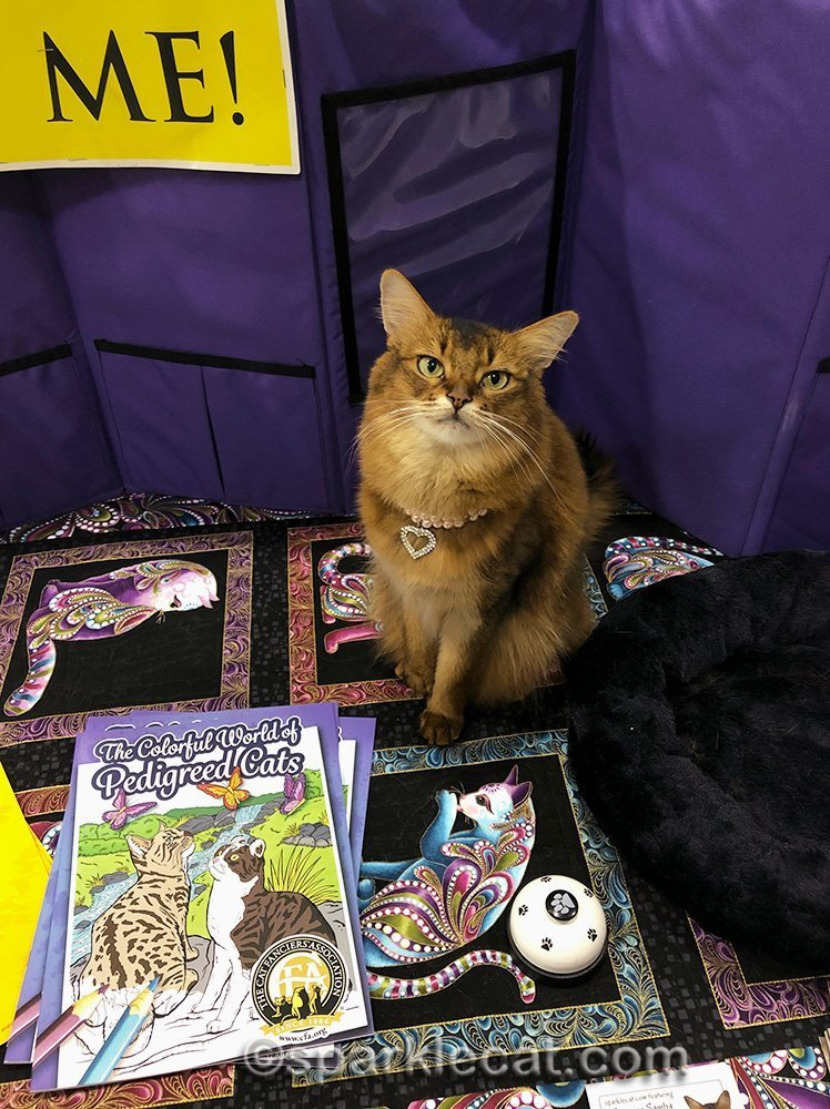 somali cat with CFA coloring books