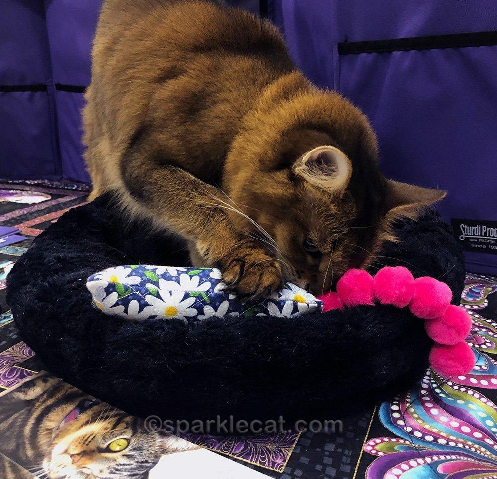 somali cat whiffing catnip kicker toy